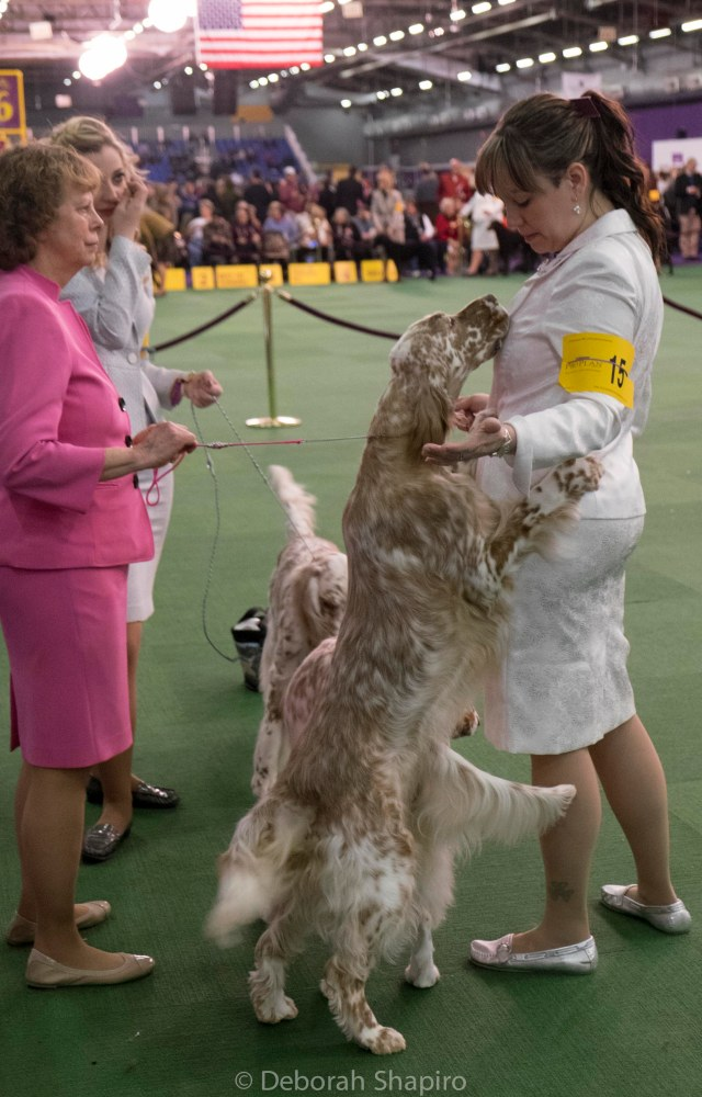 English Setters (We Won, Can We Play Now?)